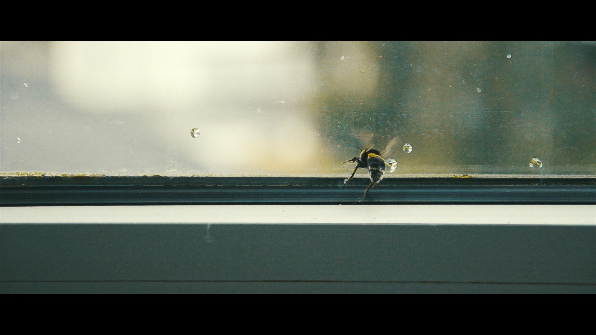 Drunken Bee Slow Motion 10% Speed